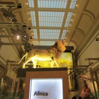 Smithsonian Museum of Natural History Africa Exhibit