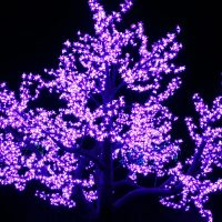 Purple Tree at Atlanta Botanical Gardens