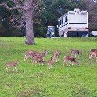 Deer everywhere!