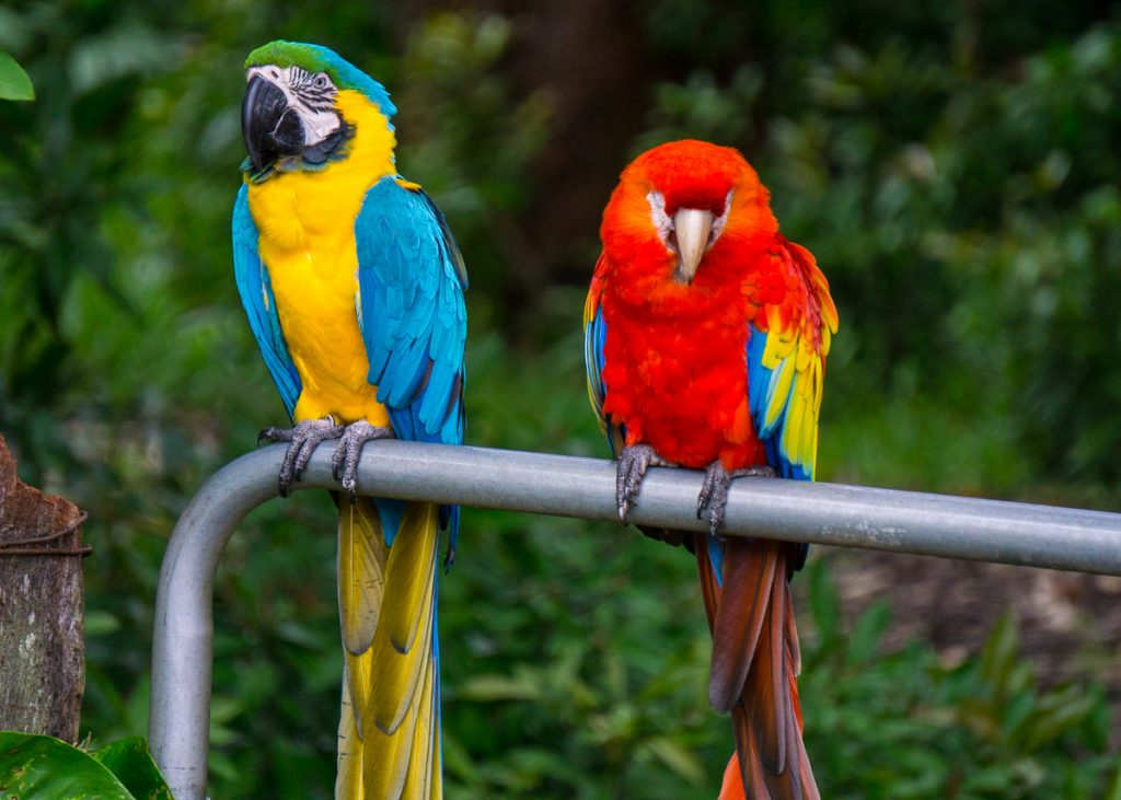 Parrots at a roadside attraction
